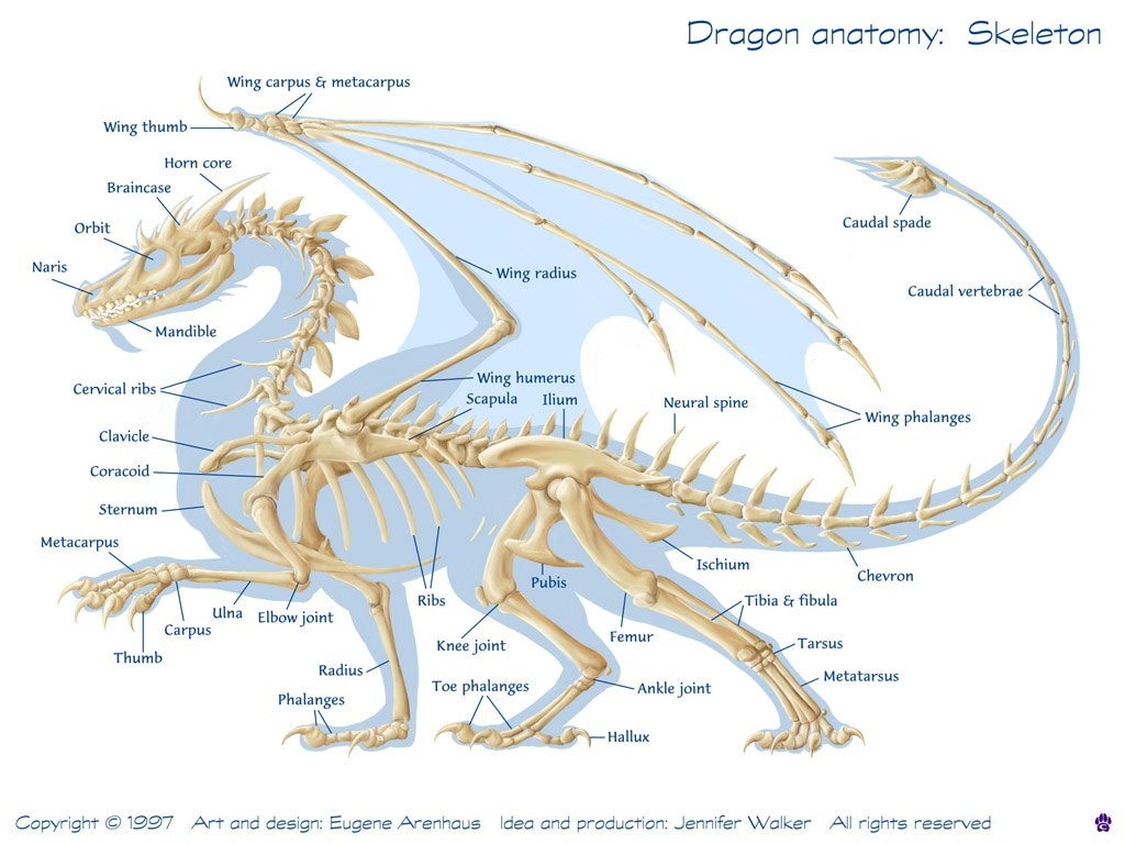 The Artistic Study of Anatomy (and Dragons) - Ms Pollock\'s Weebly